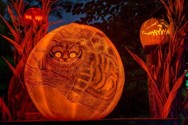 """The Cheshire Cat"". (Photo by Frank C. Grace/Courtesy Jack-O-Lantern Spectacular)"