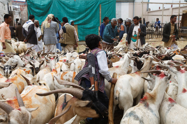 A boy carrying a weapon stands among livestock at a cattle market ahead of the Eid al-Adha festival in Sanaa, Yemen September 10, 2016. (Photo by Mohamed al-Sayaghi/Reuters)