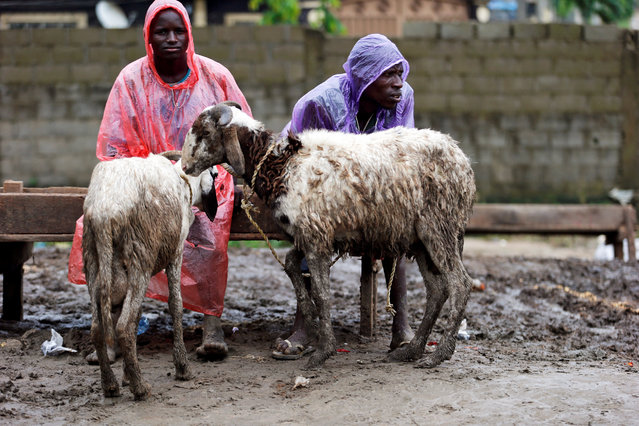 Men selling sheep wait for customers at a local livestock market, ahead of the Eid al-Adha festival, in Lagos, Nigeria September 11, 2016. (Photo by Akintunde Akinleye/Reuters)