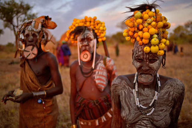 """Women from the Mursi tribe pose for a photo in the Mago National park near Jinka in Ethiopia's southern Omo Valley region on September 21, 2016. The Mursi are a Nilotic pastoralist ethnic group which number around 10,000 people in Ethiopia. Some Mursi women choose to wear a saucer lip plate (dhebi a tugoin). A girls lower lip is cut when she reaches the age of 15 or 16. The wound is then stretched over time to accomodate a large clay plate. The Mursi tribe are one of the few tribes left who continue this practise. The construction of a sugar factory in Mago National Park has begun to change the way of life for many Mursi as they begin to leave their traditional way of life to work at the factory. Human rights groups also report that the Mursi fear eviction by the Ethiopian government from a large area of the park altogether. The construction of the Gibe III dam, the third largest hydroelectric plant in Africa, and large areas of very """"thirsty"""" cotton and sugar plantations and factories along the Omo river are impacting heavily on the lives of tribes living in the Omo Valley who depend on the river for their survival and way of life. Human rights groups fear for the future of the tribes if they are forced to scatter, give up traditional ways through loss of land or ability to keep cattle as globalisation and development increases. (Photo by Carl De Souza/AFP Photo)"""