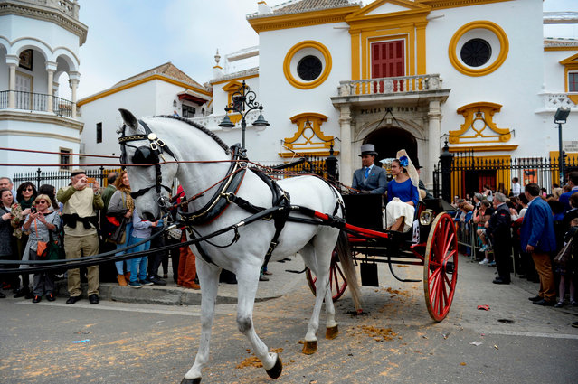 """A horse pulls a buggy during the XXXIII """"Enganches"""" (Horse- drawn carriages) exhibition at the Real Maestranza bullring in Sevilla on April 15, 2018. (Photo by Cristina Quicler/AFP Photo)"""