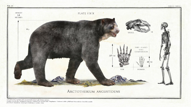 This enormous prehistoric relative of the brown bear, Arctotherium angustidens, was the height of a grown man when walking on all four paws. (Photo by Sky TV/The Guardian)