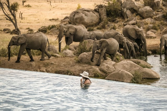 World's Greatest Swimming Pools: Four Seasons, Serengeti Pool, Tanzania. A show of elephants, buffalo and baboons awaits thanks to an active watering hole below the free-form infinity pool at this plush hideaway inside Serengeti National Park. Bonus: Because of infrared technology at the hole, guests can be notified on their bedroom TV when animals are approaching. When you've got word of wildlife on the horizon, catch them from your private terrace – or head back to the pool. (From $1,650). (Photo by Four Seasons)