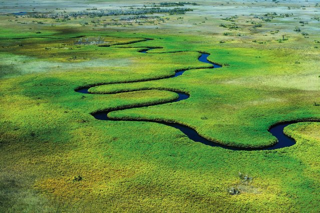 This river on the Okavango Delta in Botswana looks like a blue water snake. (Photo by Alex Bernasconi)