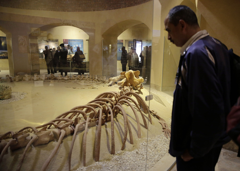 Middle East's First Museum Dedicated to Fossils