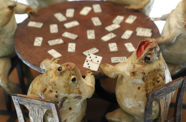 Frogs playing dominos at the Frog Museum, a collection of 108 stuffed frogs in scenes portraying everyday life in the 19th-century and made by Francois Perrier, in Estavayer-le-Lac, Switzerland on November 7, 2018. (Photo by Denis Balibouse/Reuters)