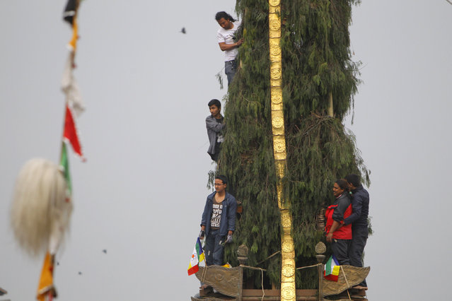 Hindu devotees hang on to the chariot to perform rituals during Seto Machindranath Chariot festival in Kathmandu, Nepal, Friday, March 27, 2015. Hindu and Buddhist worshippers participate in the week-long chariot festival, praying for rainfall and good harvest. (Photo by Niranjan Shrestha/AP Photo)