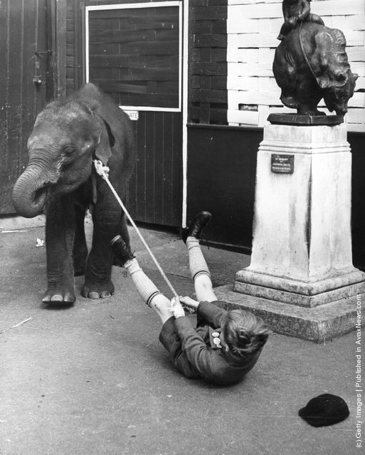 A baby elephant pulling a child along on a string