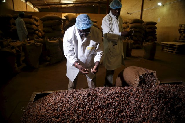 Factory officials take samples of cocoa beans at a cocoa processing factory in Ile-Oluji village in Ondo state, southwest Nigeria March 29, 2016. (Photo by Akintunde Akinleye/Reuters)
