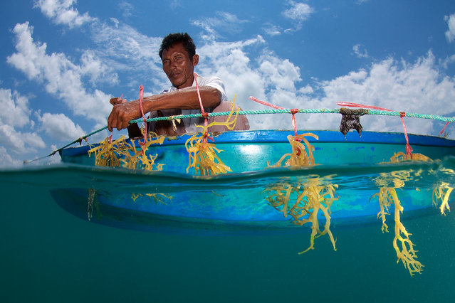 Seaweed Farming in Malaysian Borneo by Eric Madeja. Seaweed farming has been heavily promoted to be an alternative, stable and sustainable income for fisherman in the Semporna region, taking pressure off the overfished reefs. (Photo by Eric Madeja/2016 Atkins CIWEM Environmental Photographer of the Year)