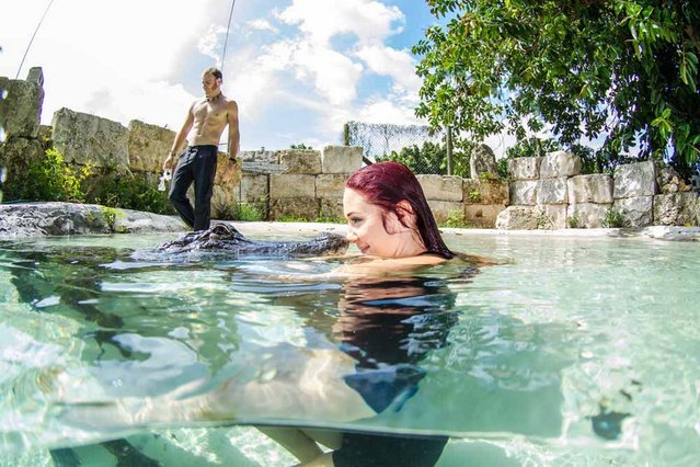 Ashley Lawrence and Christopher Gillette swim with a rescued alligator. (Photo by John Chapa/Barcroft Media)