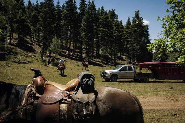 Cowboys are pictured past a saddle mount, up on their horses after eating lunch near Ignacio, Colorado June 11, 2014. The land where the cattle graze is leased from the Forest Service by third-generation rancher Steve Pargin. Several times a year, he and a crew led by his head cowboy, David Thompson, spend a week or more herding cattle from mountain range to mountain range to prevent them from causing damage to fragile ecosystems by staying in a single area too long. (Photo by Lucas Jackson/Reuters)