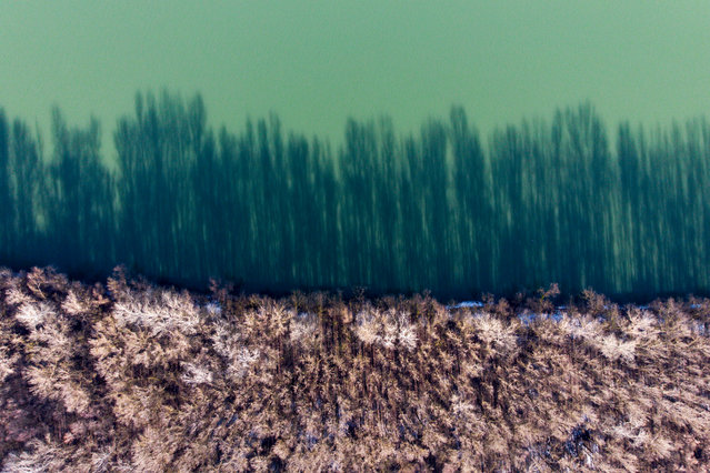 A picture taken with a drone shows coastal trees casting shadows on River Tisza at Tiszakeszi, Hungary, 29 January 2020. In the night of 30 January 2000, a dam at the gold mining company Aurul, a joint-venture of the Australian company Esmeralda Exploration and the Romanian government, holding contaminated waters, burst and spilled 100,000 cubic meters of cyanide-contaminated water (containing an estimated 100 tons of cyanide). The polluted waters spilled over farmlands and into the Somes river and reached the Tisza and then the Danube, killing large numbers of fish in Hungary, Serbia and Romania. The spill has been called the worst environmental disaster in Europe since the Chernobyl disaster. The Hungarian government on 16 July 2000 declared 01 February as the memorial day of the Tisza wildlife. (Photo by Zsolt Czeglédi/EPA/EFE)