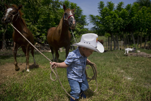 In this July 29, 2016 photo, 2-year-old cowboy Wrangler Ponce pulls two horses at his parents farm in Sancti Spiritus, central Cuba. (Photo by Ramon Espinosa/AP Photo)