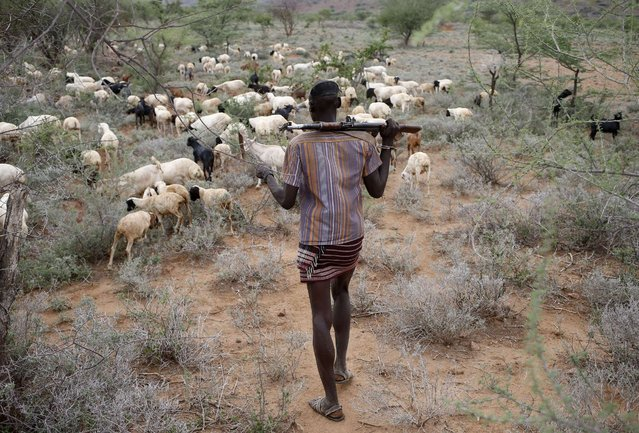 A Turkana man carrying a weapon herds his goats in northwestern Kenya inside the Turkana region of the Ilemy Triangle September 26, 2014. (Photo by Goran Tomasevic/Reuters)