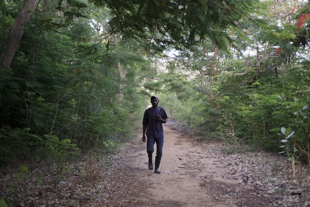Gustavo Adolfo, a Haitian who returned from the Dominican Republic and currently lives in a refugee shelter, walks in the woods near Anse-a-Pitres, Haiti, September 6, 2015. (Photo by Andres Martinez Casares/Reuters)
