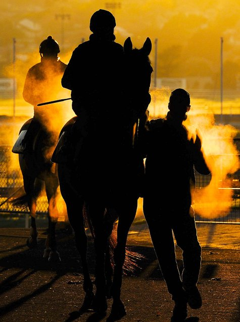 Trainer Nigel Blackiston walks Desert Jeuney back to the stables after a morning workout at Moonee Valley Racecourse in Melbourne, Australia, on September 22, 2014. (Photo by Vince Caligiuri/Getty Images)