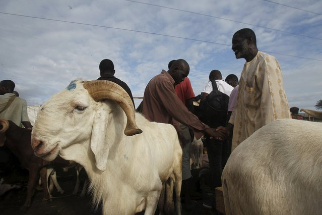 Men buy sheep at a sheep market two days ahead of Eid al-Adha, in Port Bouet, Abidjan, Ivory Coast September 22, 2015. (Photo by Luc Gnago/Reuters)