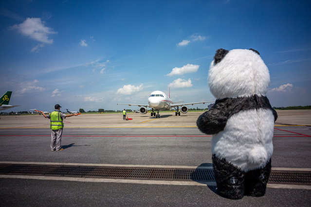 A giant panda toy welcomes a flight carrying giant pandas Yun'er and Zhen Sheng at Yangzhou Taizhou International Airport on August 5, 2020 in Yangzhou, Jiangsu Province of China. Two giant pandas Yun'er and Zhen Sheng from China Conservation and Research Centre for the Giant Panda arrived at Yangzhou Taizhou International Airport on Wednesday afternoon. They will be sent to Dafenggang Zoo in Yancheng. (Photo by Yu Xing/VCG via Getty Images)