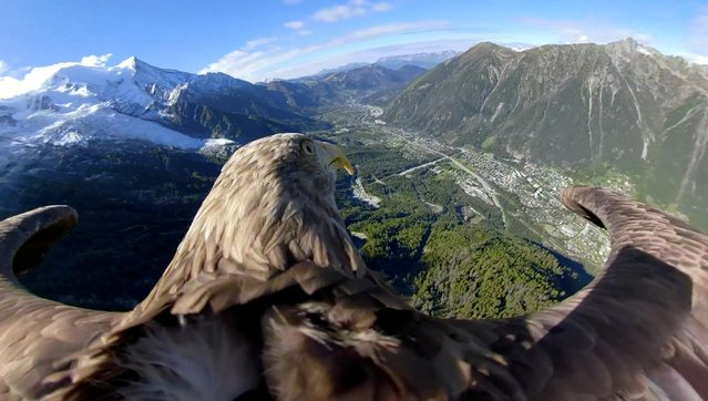 Victor, a 9-year-old white-tailed eagle equipped with a 360 camera, flies over glaciers and mountains in Chamonix, France, in this still image taken from a video released October 8, 2019. The bird and its handlers are preparing for the Alpine Eagle Race, a collaboration through the eyes of the eagle, a photographer and a scientist to fly over five glaciers in five European countries in five days, to raise awareness of global warming. (Photo by Eagle Wings Foundation/Chopard/Handout via Reuters)