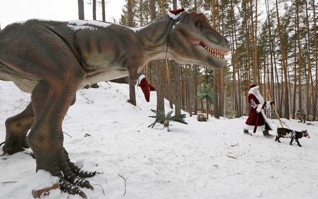 "A man dressed as Father Frost, the Russian equivalent of Santa Claus, walks with Knopka, a Cameroon dwarf goat, through the ""Dinosaurs Park"", located in the Taiga area at the Royev Ruchey zoo in the suburbs of Russia's Siberian city of Krasnoyarsk, December 16, 2014. (Photo by Ilya Naymushin/Reuters)"