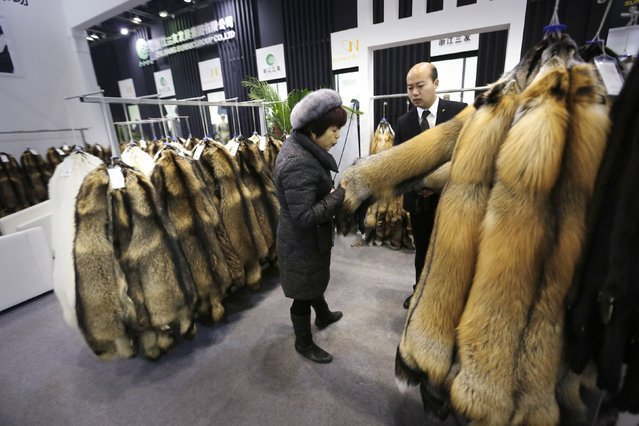 A buyer blows the fur of farmed fox as she checks the quality at the 2015 China Fur and Leather Products Fair in Beijing, January 15, 2015. (Photo by Jason Lee/Reuters)