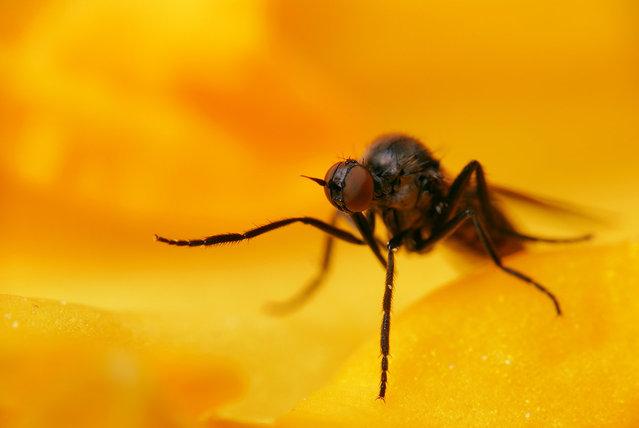 Fly. (Photo by Boris Godfroid)