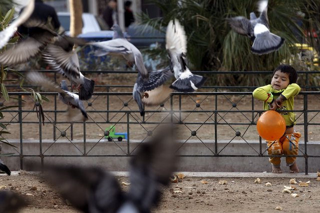 A migrant child watches pigeons in Victoria Square, where lots of migrants sleep rough, in central Athens, Greece, December 25, 2015. (Photo by Michalis Karagiannis/Reuters)
