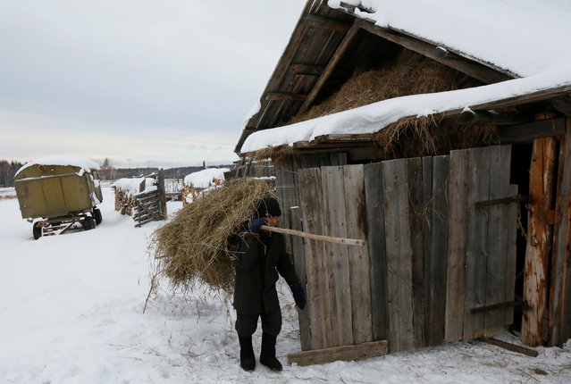 Mikhail Baburin, 66, carries hay to feed sheeps at a court yard of his house in the remote Siberian village of Mikhailovka, Krasnoyarsk region, Russia, December 5, 2016. (Photo by Ilya Naymushin/Reuters)