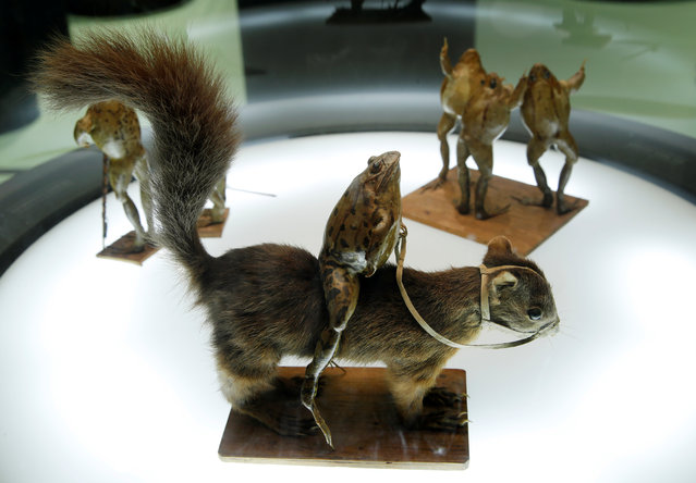 A frog riding a squirrel at the Frog Museum, a collection of 108 stuffed frogs in scenes portraying everyday life in the 19th-century and made by Francois Perrier, in Estavayer-le-Lac, Switzerland on November 7, 2018. (Photo by Denis Balibouse/Reuters)