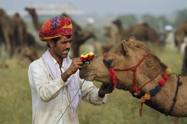 An Indian camel herder decorates his camel for the annual cattle fair in Pushkar, in the western Indian state of Rajasthan, India, Saturday, November 9, 2013. Pushkar, located on the banks of Pushkar Lake, is a popular Hindu pilgrimage spot that is also frequented by foreign tourists who come to the town for the annual cattle fair and camel races. (Photo by Ajit Solanki/AP Photo)