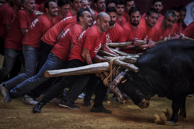 "A group of men perform the bullfight of ""Capeia Arraiana"" during the Bullfighting Day at the Campo Pequeno bullfighting arena in Lisbon on February 23, 2019. (Photo by Patricia De Melo Moreira/AFP Photo)"