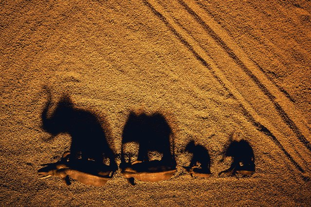 Elephant shadows on cat sand. (Photo by Julia Wimmerlin/Caters News)