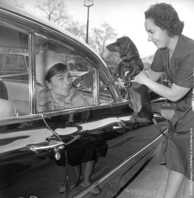 1962: A member of the Embassy staff holds 'Pune' the dachshund to say goodbye to Queen Farah Diba of Iran who is leaving in a limousine