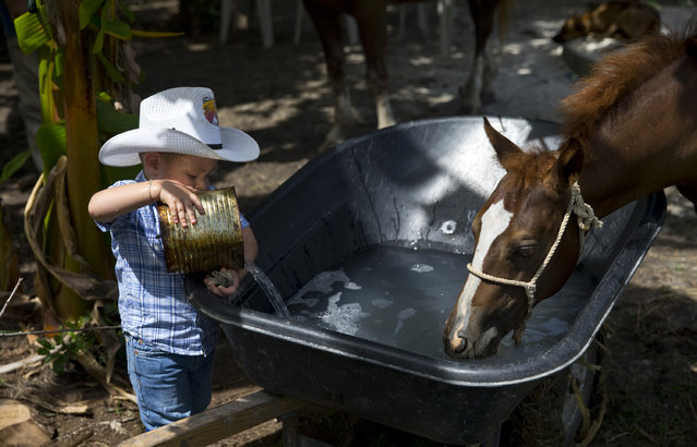 In this July 29, 2016 photo, 2-year-old cowboy Wrangler Ponce pours water into a wheelbarrow serving as a water troff for the horses at his parents farm in Sancti Spiritus, central Cuba. (Photo by Ramon Espinosa/AP Photo)