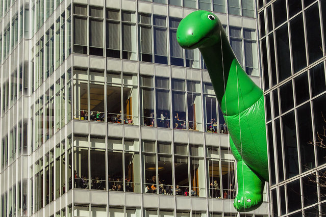 People watch from windows as the Sinclair Dino balloon  moves through Sixth Avenue during the Macy's Thanksgiving Day Parade in New York on November 23, 2017. (Photo by Andres Kudacki/AP Photo)