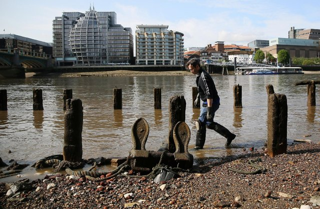 Mudlark Jason Sandy looks for items on the bank of the River Thames in London, Britain May 22, 2016. (Photo by Neil Hall/Reuters)