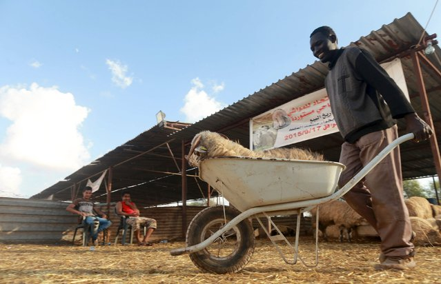 A worker transports a sheep in a wheelbarrow at a livestock market, ahead of Eid al-Adha in Benghazi, Libya, September 22, 2015. (Photo by Esam Omran Al-Fetori/Reuters)