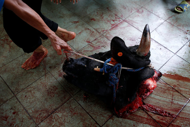 A worker at a mosque drags a cow's head after it was sacrificed for the Muslim holiday of Eid Al-Adha outside a mosque in Jakarta, Indonesia September 12, 2016. (Photo by Darren Whiteside/Reuters)