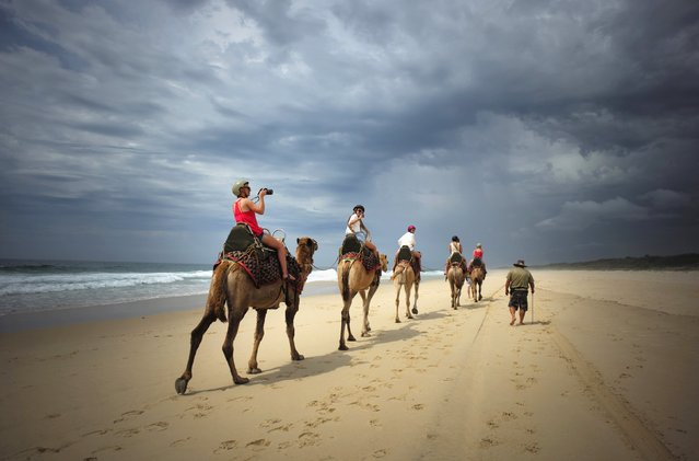 A tourist takes a picture under storm clouds during a camel safari tour alongside the Pacific Ocean on Lighthouse Beach, north of Sydney, December 4, 2014. (Photo by Jason Reed/Reuters)