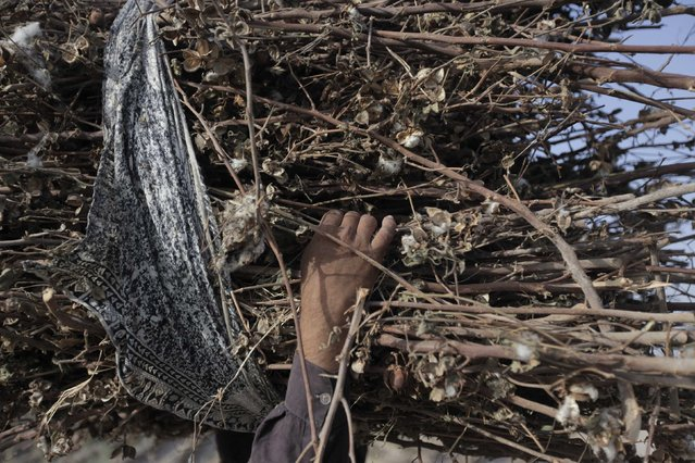 A boy carries a bundle of dry cotton plants to use as fuel to cook food in a field in Meeran Pur village, north of Karachi September 26, 2014. (Photo by Akhtar Soomro/Reuters)