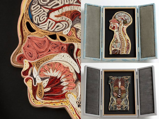 Paper Anatomy By Lisa Nilsson