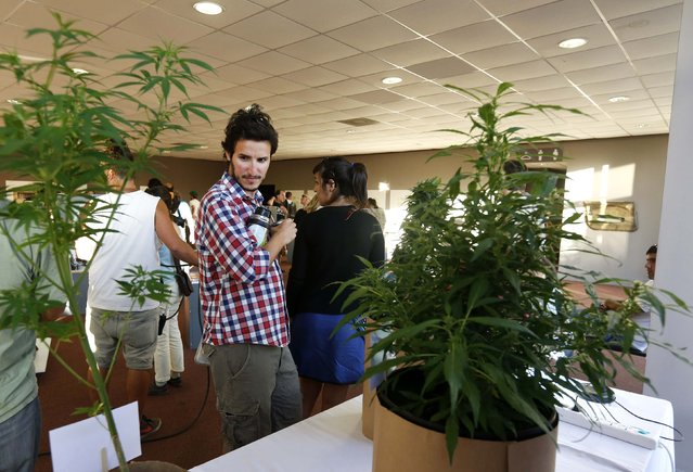 "People look at cannabis plants during the first ""Expo Cannabis"" fair in Montevideo December 14, 2014. (Photo by Andres Stapff/Reuters)"