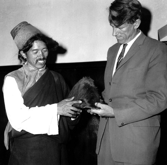 New Zealander Sir Edmund Hillary, conquerer of Mount Everest, and elder sherpa Khunjo Chumbi is pictured in Calcutta, India, December 9, 1960 holding the hairy scalp which, according to Himalayan villagers, belonged to a Yeti. (Photo by AP Photo)