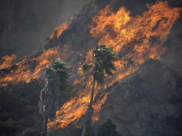 Flames race across hills as a raging brush fire pushes towards the coast in Camarillo May 2, 2013. The wind-driven wildfire raging along the California coast north of Los Angeles prompted the evacuation of hundreds of homes and a university campus on Thursday as flames engulfed several farm buildings and recreational vehicles near threatened neighborhoods. (Photo by Gene Blevins/Reuters)