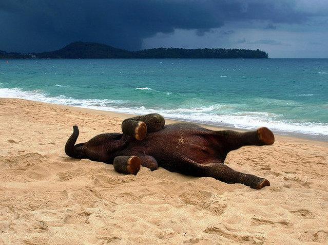 Baby Elephant On A Beach