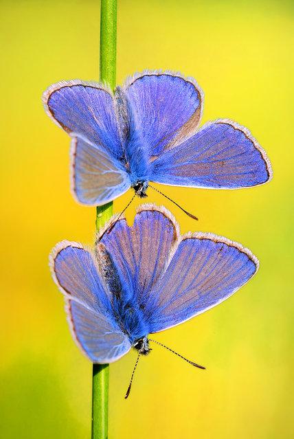 Butterflies. (Photo by Boris Godfroid)