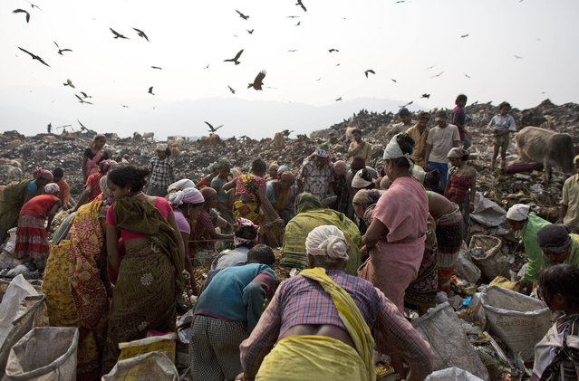 Scavengers crowd around a fresh load of garbage dumped by a collection truck on the outskirts of Gauhati, India, Monday, January 26, 2015. (Photo by Anupam Nath/AP Photo)