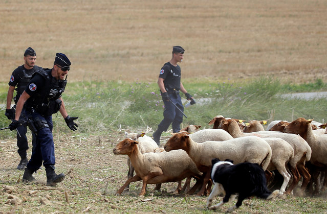 Police officers chase away sheep after a protest who attempted to block the stage' s route, during the 16 th stage of the 105 th edition of the Tour de France cycling race, between Carcassonne and Bagneres- de- Luchon, southwestern France, on July 24, 2018. (Photo by Stephane Mahe/Reuters)