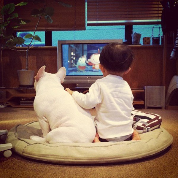 Japanese Boy and His Bulldog